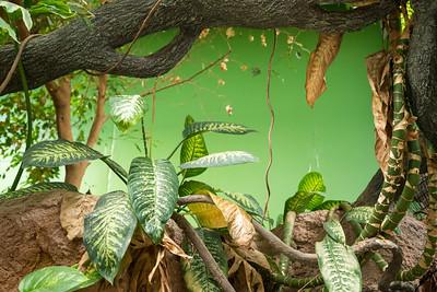 Leaves green 07357