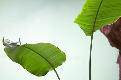 leaves C5840