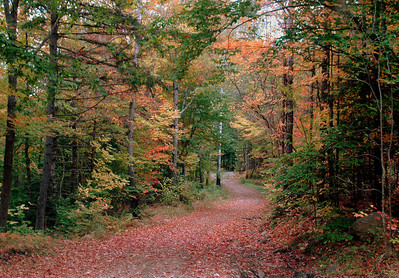 Fall Path, Adirondacks