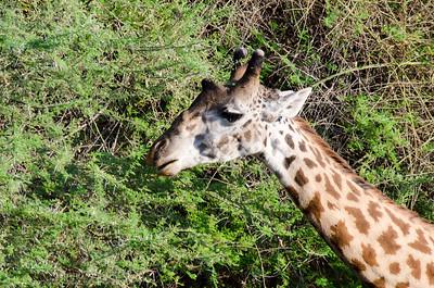 Africa Day 10 (Lake Manyara)