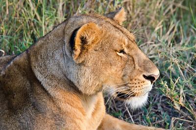 Africa Day 13 (Serengeti)