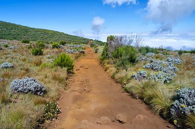 Africa Day 8 (Mt. Kilimanjaro)
