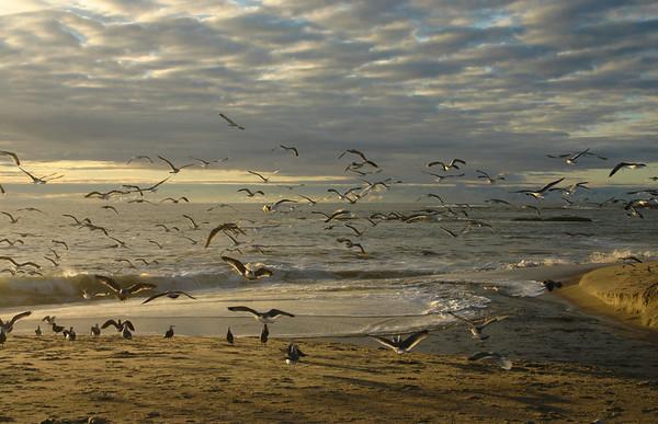 Aliso Beach