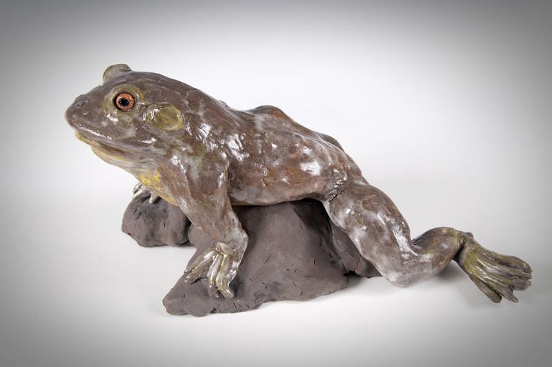 sn799. Bullfrog.