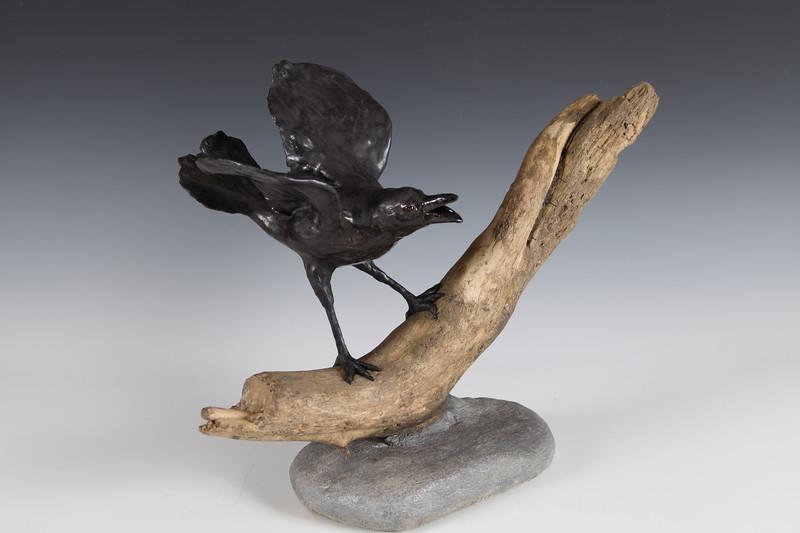 sn808. Angry Crow on Driftwood