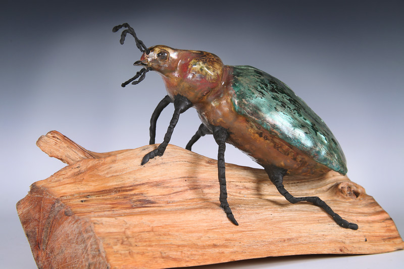 sn811. Calosoma Beetle