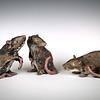 sn 629-631,  Rat Pack.  Raku,  $350.
