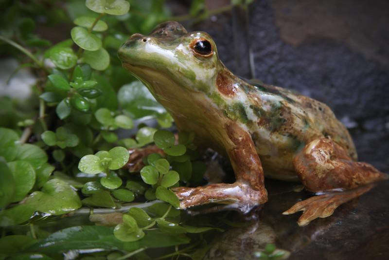 sn685 Mink Frog