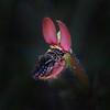 WA Native Bee inidentified sp