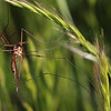 crane-fly Cetoniinae<br /> Canon 60D 100mm 2.8 EF Macro lens.