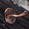 Perth Hills Fungi