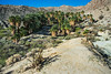 20160227_DSC5673-EditMountain Palm Springs