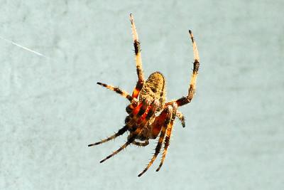 Various Spiders
