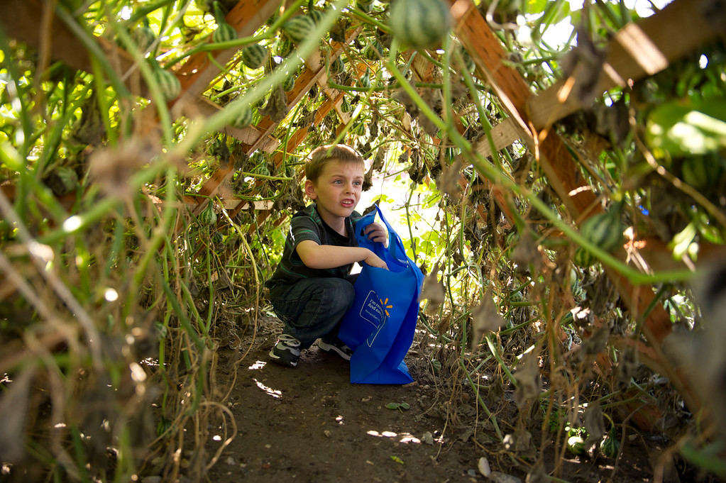 Chance Kemp explores a tunnel-like lattice covered with spinning gourds Tuesday, Sept. 17, at the Tongue River School Garden. The garden is used to teach the students about science and encourages healthy eating. (The Sheridan Press/Justin Sheely)