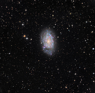 "Sculptor semi-dwarf galaxy NGC 7793.  The nebula S26 associated with a microquasar can be seen as an elogated red blob near the edge of the galaxy at about 8 o'clock. (See also the same image in H-alpha).  Notice the pair of tadpole=like interacting galaxies near the top of the left hand edge of the image.  Luminance 16hrs (16x1hr unbinned), RGB 6hrs (4x30 min 2x2 each channel). Aspen CG16M on 20"" PlaneWave. Processed with our own GoodLook 64."