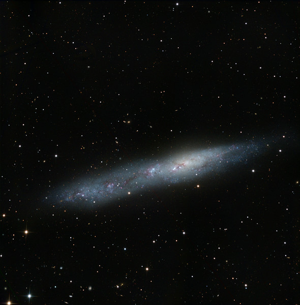 NGC 55, a large, bright, magellanic-style heavily distorted galaxy. Intensely blue due to massive tidal triggering of star formation, excepting for a warm halo right of centre, presumably representing the old nucleus. L: 10x1hr. RGB:  5h30m total. There are over 100 small, distant, galaxies in the image. Width 35'arc, North up.