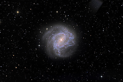 """M83, a very bright nearby face-on spiral. Note salmon-pink core of older stars, bright blue clusters of hot young OB stars in the spiral arms, and fine dust lanes. An explore of the full-size image will show very many background galaxies.  Exposure details gone forever but of the order of L6h, RGB 1.5h.  STL11000M on 20"""" PlaneWave CDK on modified MI-750 fork. All software, firmware, and electronics is my own design and build."""