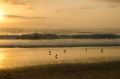 Birds along the surf at Carlsbad, CA