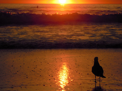 Seagull watching the sunset in Carlsbad, California.