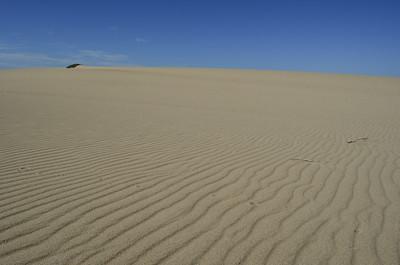Guadalupe Dunes Preserve, California