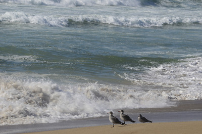 Trio of birds watch the surf