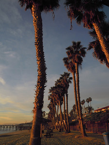 Line of Palm Trees, San Clemente, CA