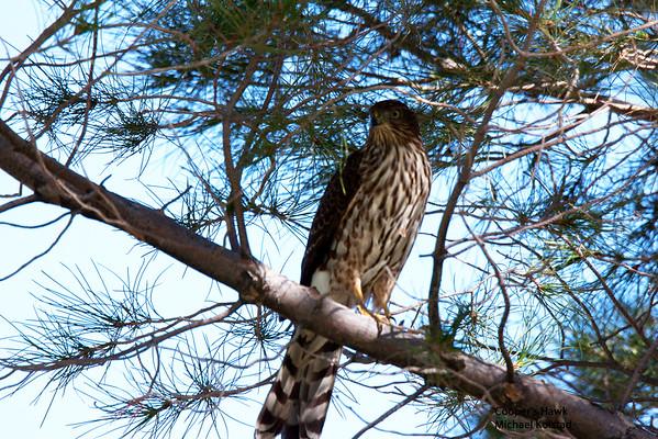 Audubon trip Dell City, TX,  2014 10 04