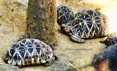 more Tortoise