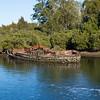 Shipwreck on Moruya River