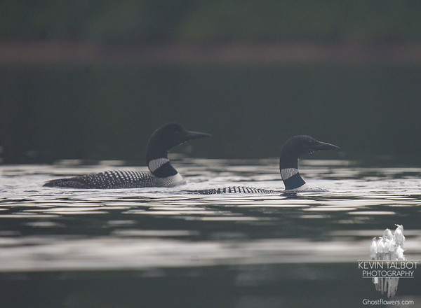 Wednesday-Paddling with Loons on Kidney Pond...