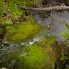 Mossy brook.