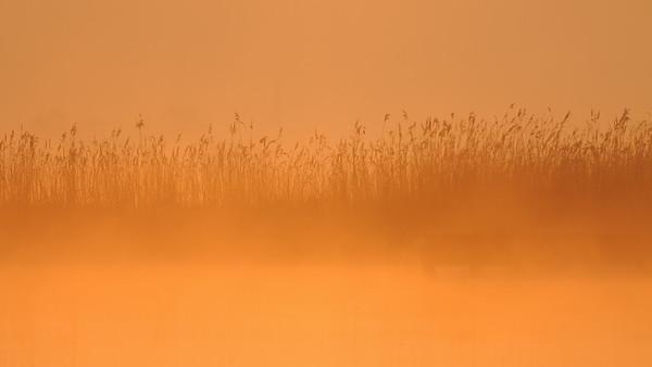 Mist, Ilperveld. The Netherlands.