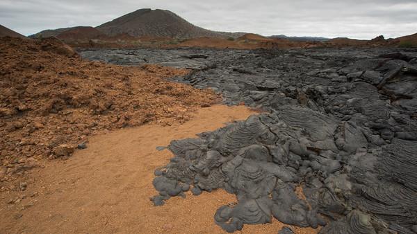 Lava Cactus, Brachycereus nesioticus. Bahia Sullivan, Santiago Is. Galápagos.