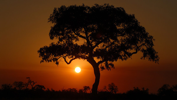 Sundown. Panthera leo. Savute, Botswana.