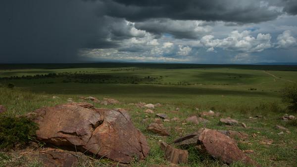 Masai Mara, kenya.