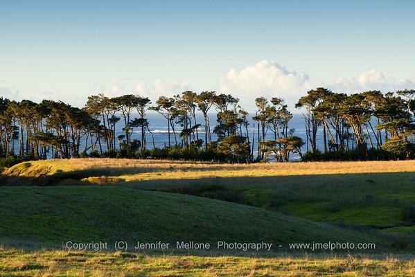 Eucalyptus Trees after Sunrise