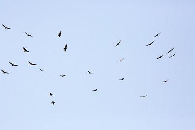 birds C2674