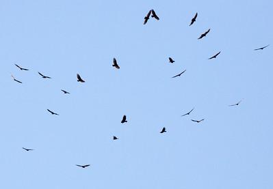 birds eagles? C2686