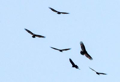 birds C2673