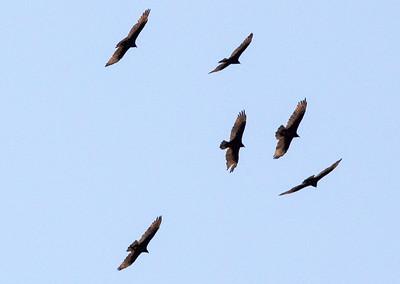 birds closer C2675
