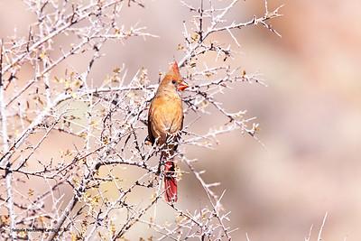 Birds of Big Bend, Texas