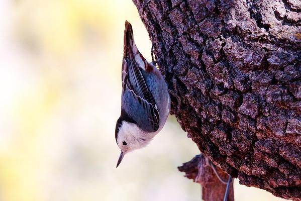 Birds of Ft Davis, Texas