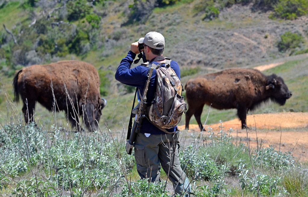 . Wildlife Biologist Calvin Duncan with an air rifle that will deliver a contraceptive-filled dart. Bison sterilization program on Catalina Island by the Catalina Island Conservancy. (April 14, 2014. Photo by Brad Graverson/The Daily Breeze)