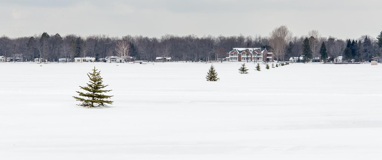 Christmas (Navigation) Trees on Black Lake, Michigan -  March 4, 2016