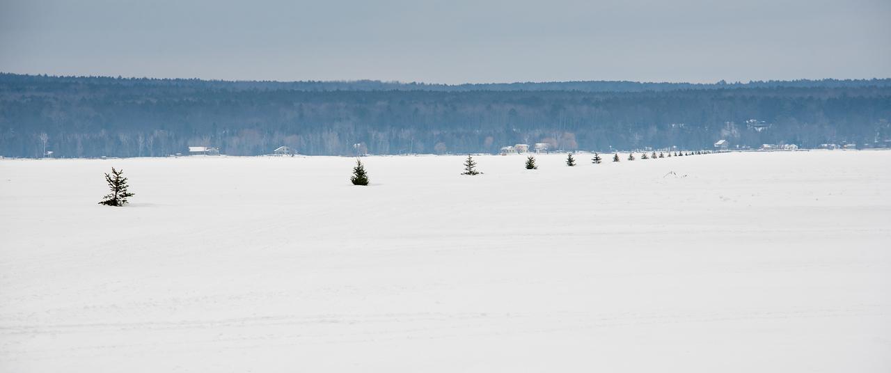 Line of Christmas Trees on  Black Lake - February 16, 2016