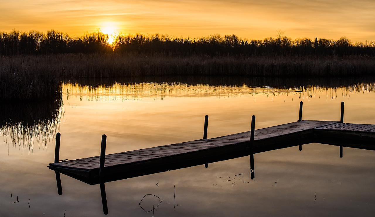 Beaver with Sunrise on Black Lake, Michigan - May 2017