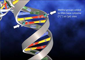 dna-methylation-25%-50%
