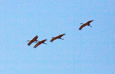 CranesFlying C5388