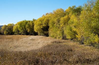 Trees 04712