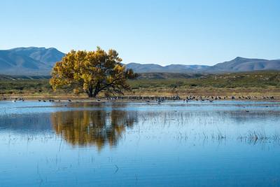 Cranes tree 04726
